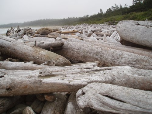 driftwood on the beach by Wickaninnish Interpretive Centre